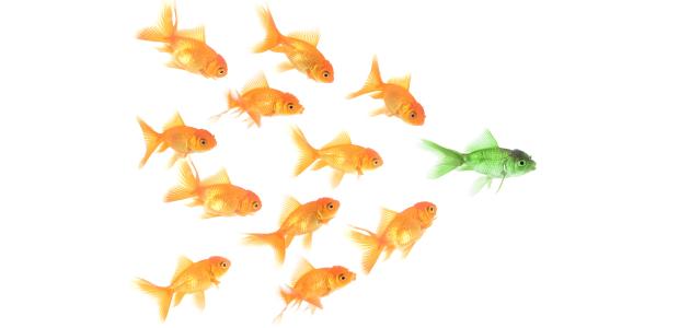 Kerk leiderschap (goudvissen)
