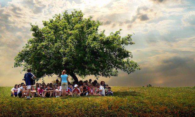 onder de grote boom