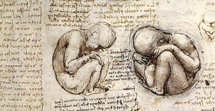 foetus (tekening van leonardo da vinci)