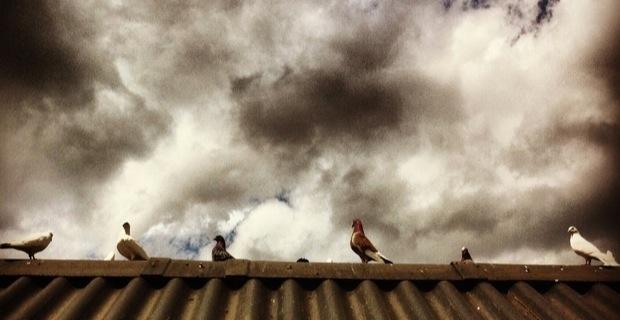 Duiven op een dakje