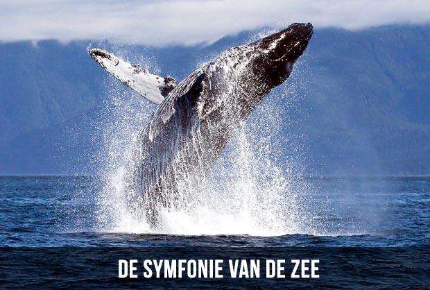 De symfonie van de zee