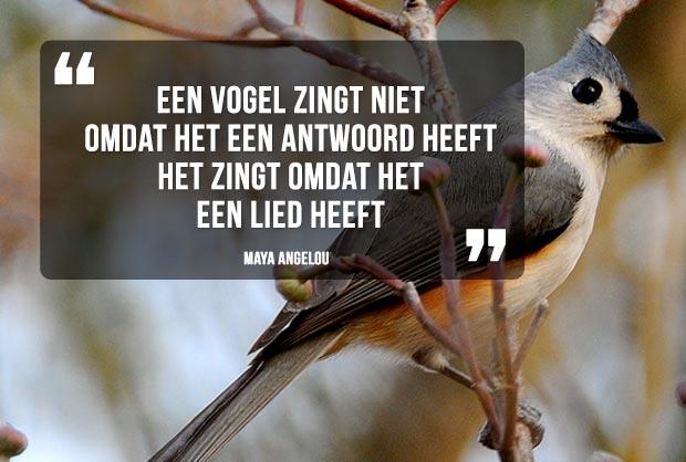 Een vogel zingt niet omdat het een antwoord heeft. Het zingt omdat het een lied heeft. Quote van Maya Angelou