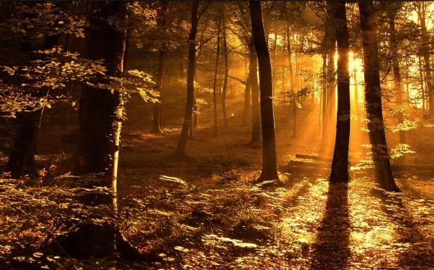 Zon in de wildernis
