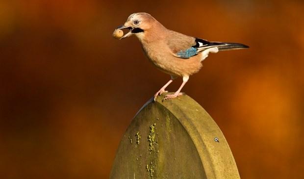 vogel op grafsteen
