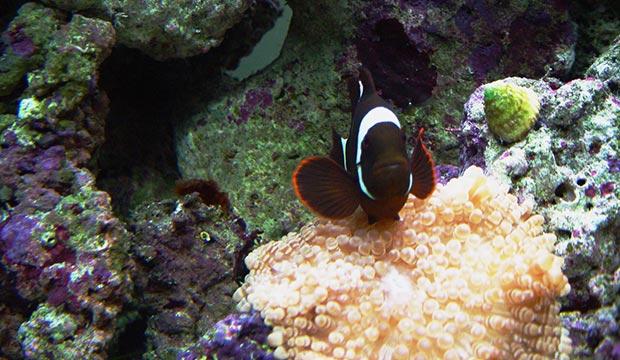 zoutwater aquarium
