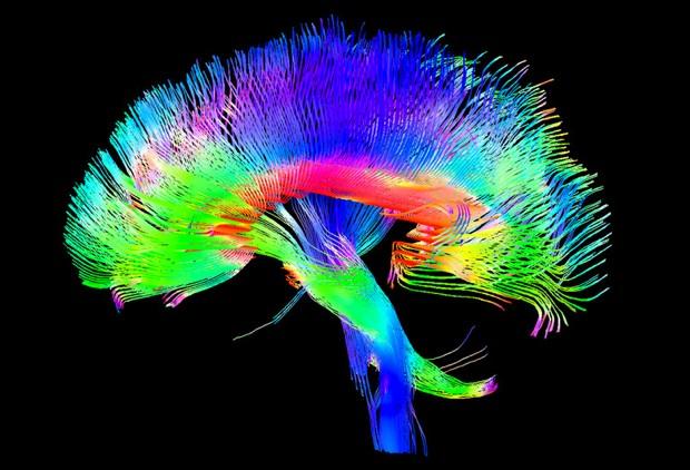 gekleurd brein