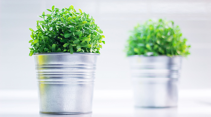plastic plantje