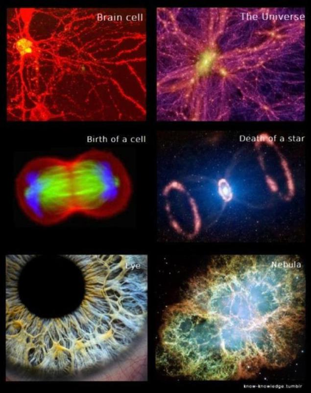 Het lichaam en het universum