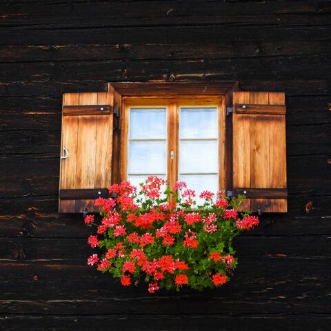 Achter de geraniums